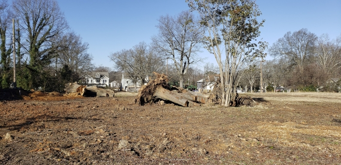 Trees cut down to make way for new construction at a site in Charlotte's Cotswold neighborhood. Photo: Doug Shoemaker