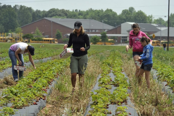 Carrigan Farms pick-your own produce in Iredell County.