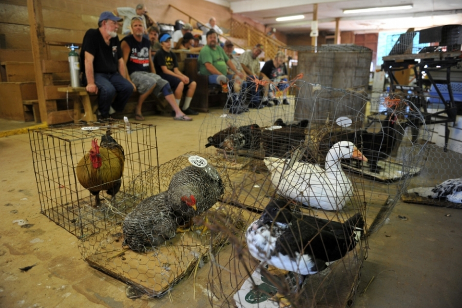 Catawba River Road (U.S. 21) near Catawba, S.C.: The Dixie Grill at Dixie Stockyard still serves a robust dinner, then children pick out their favorite small animals and beg their parents to bid.