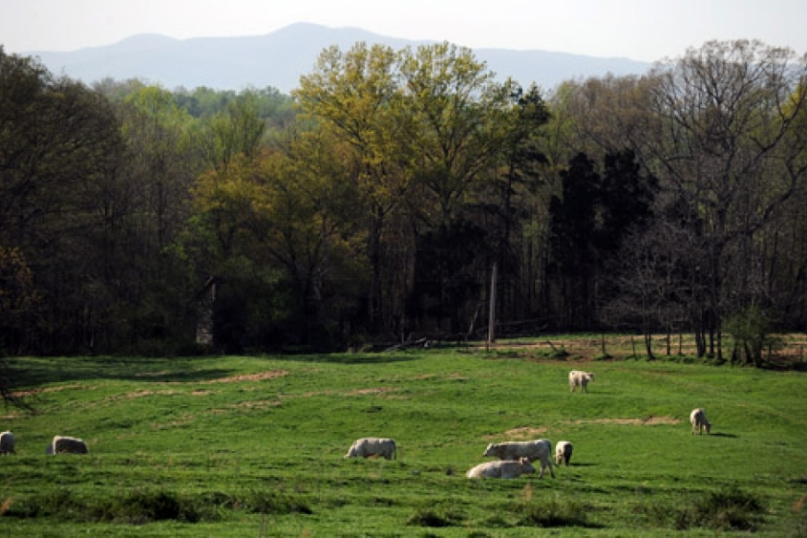 Pasture near Fallston in Cleveland County.