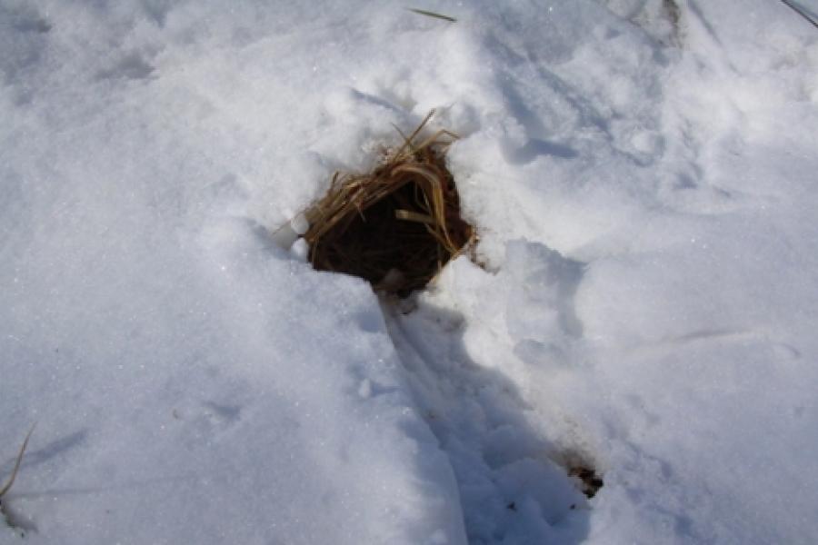 An animal burrow in the Uwharries. Photo by Watson Ross.