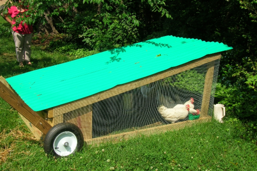 Mobile, backyard coop in Davidson, NC.  Photo courtesy of Rea Wright.