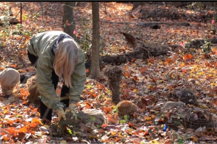 Mary O'Brian installs eco-art projects that help combat invasive species in the Charlotte woodland areas.