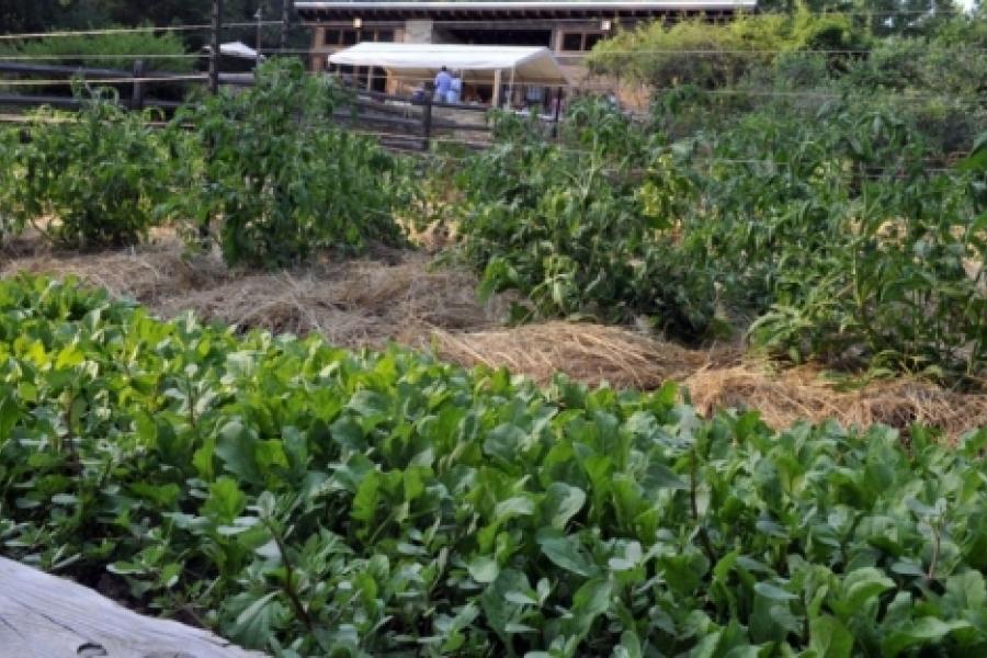 Poplar Ridge Farm (Union County) - Fields and Gardens