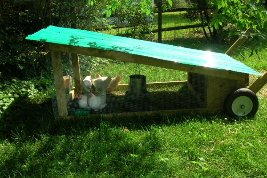 Mobile coop design allows for easy shifting in coop location to spread fertilizer effects.