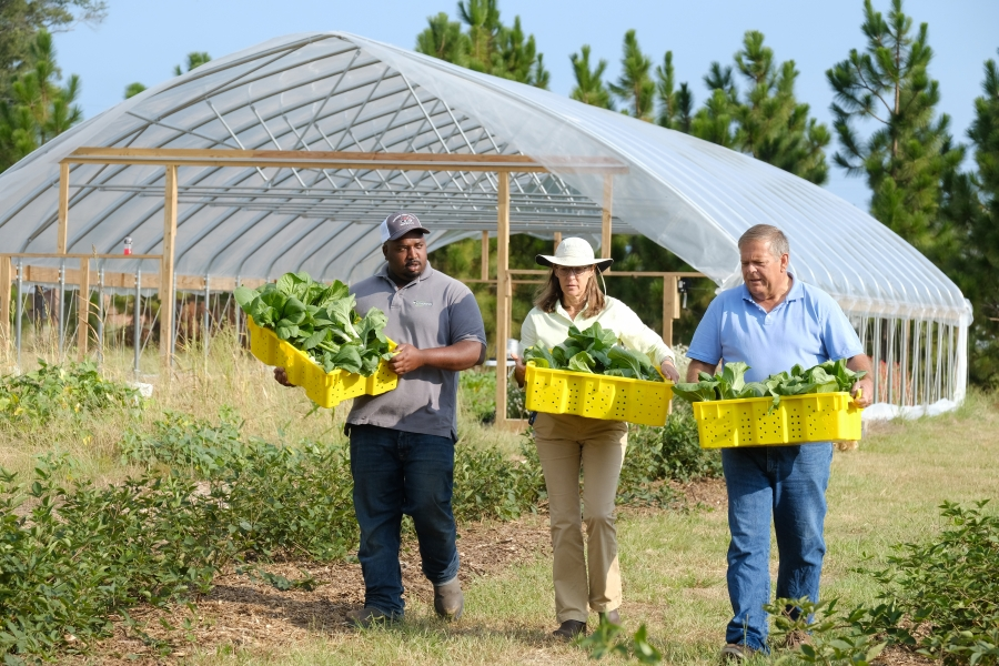 AG Innovation Center Manager Davon Goodwin, Richmond County Extension Director & Extension Agent Paige Burns, and God's Garden Manager David Clark. The AG Innovation Center's demonstration farm's high tunnel greenhouse is a project of County Extension. It's  produce supplied God's Garden, a hunger-relied non-profit in Richmond County. Photo: Nancy Pierce