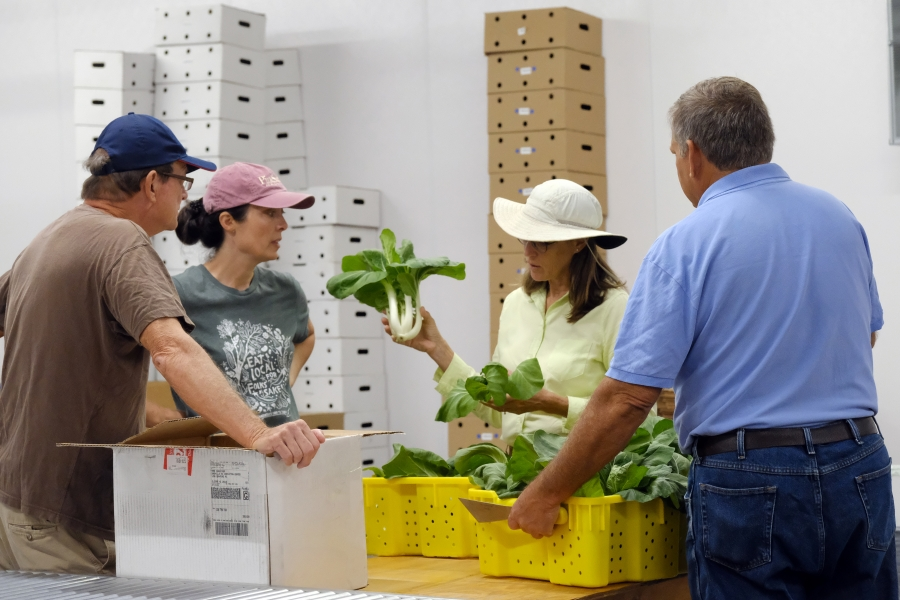 Richmond County Extension Director & Extension Agent Paige Burns discusses bok choy with Mandy Davis, co-director of Sandhills Farm-to-Table (pink hat). Photo: Nancy Pierce.