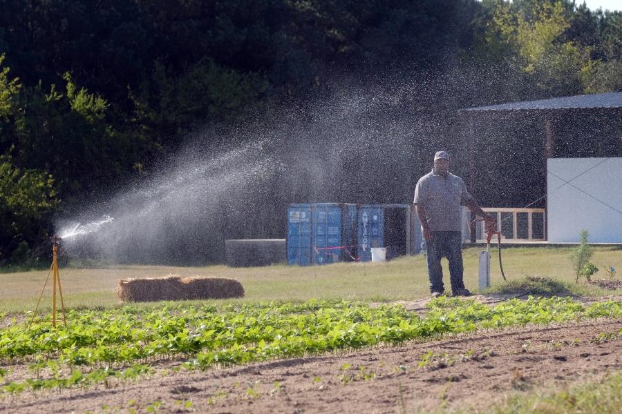 Davon Goodwin, manager of Sandhills AGInnovation Center in Ellerbee, NC, inspecting fields being irrigated. Photo: Nancy Pierce