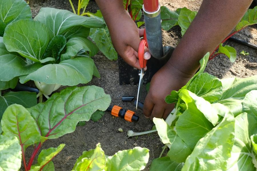 Davon Goodwin fixes an irrigation system. Photo: Nancy Pierce
