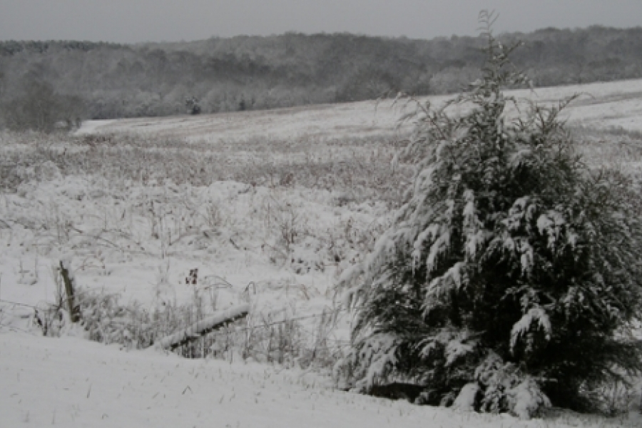 Winter scene in the Uwharries. Photo by Ruth Ann Grissom.