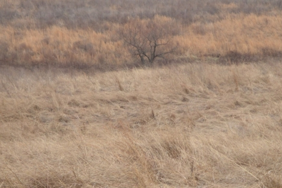 Indian grass and broomstraw.  Photo by Ruth Ann Grissom
