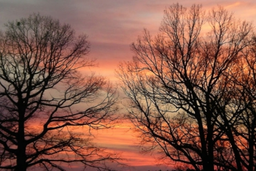 Oak and hickories at sunset.  Photo by Ruth Ann Grissom