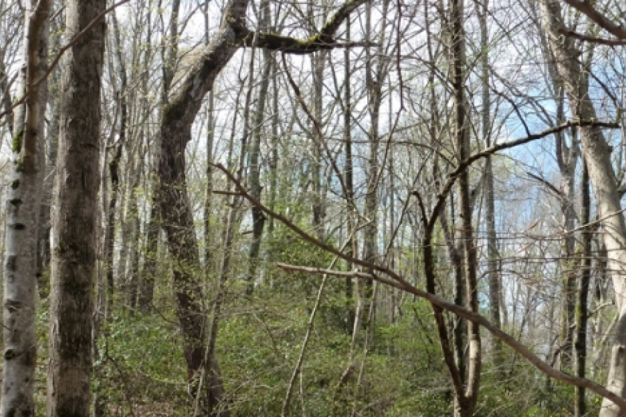 Beech, hickory, oak and mountain laurel