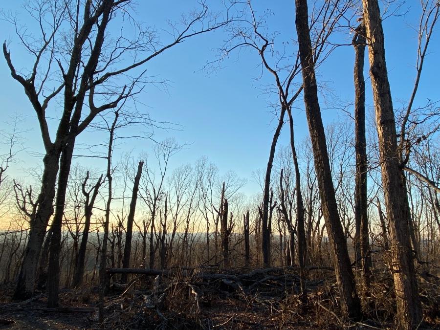 Broken trees after a windstorm in the Uwharries