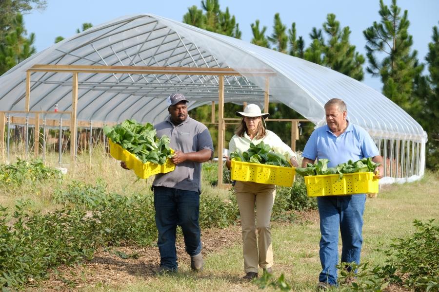 Sandhills Ag Center harvest